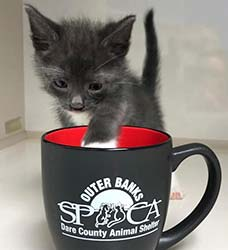 OBX SPCA Kitten