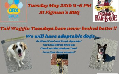 Tail Waggin Tuesdays at Pigman's BBQ! Tuesday May 25th