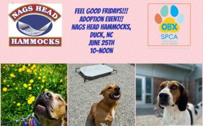 Feel Good Friday at Nags Head Hammocks in Duck!